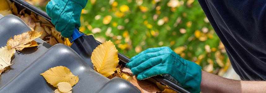 Febre Amarela: limpeza e conservação pode ajudar na prevenção da doença